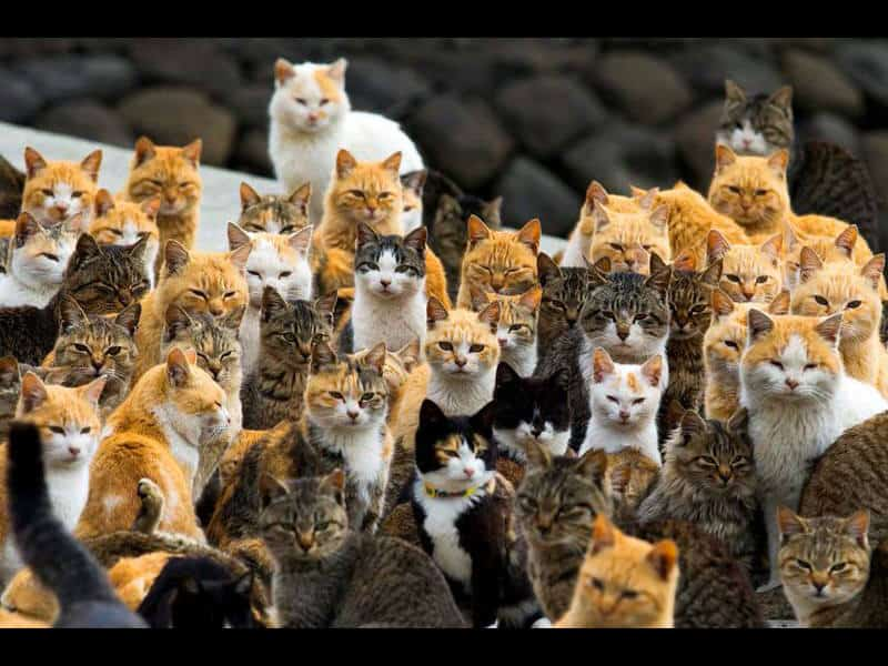 The Island Of Cats